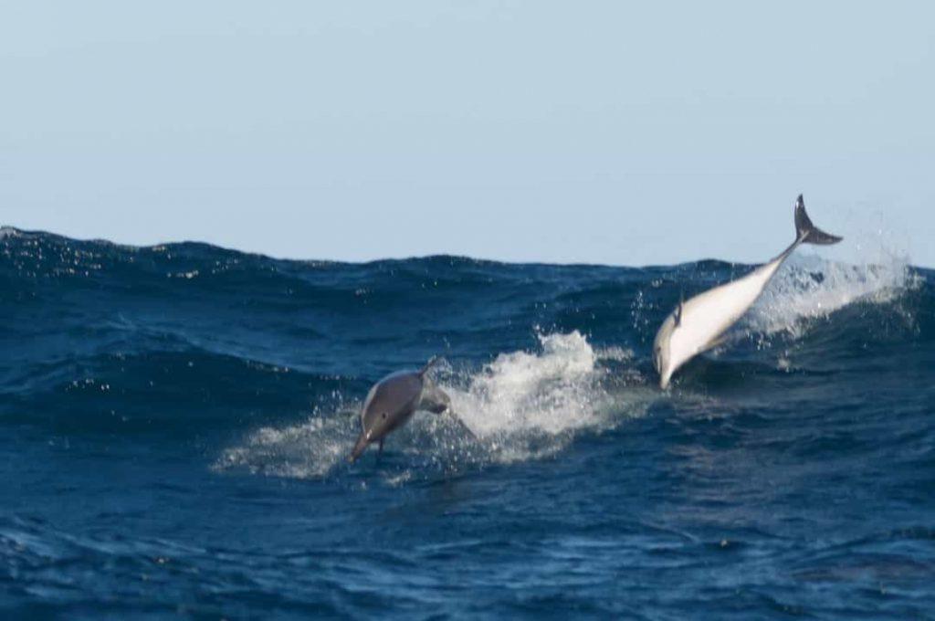 Những sự thật thú vị về cá heo có thể bạn chưa biết - phunuduongthoi.vn 5
